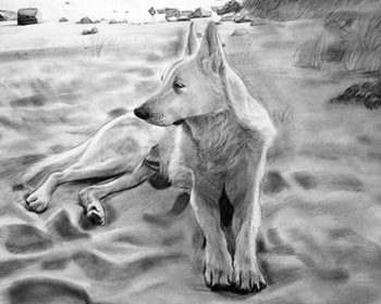 pencil dog painting from photo